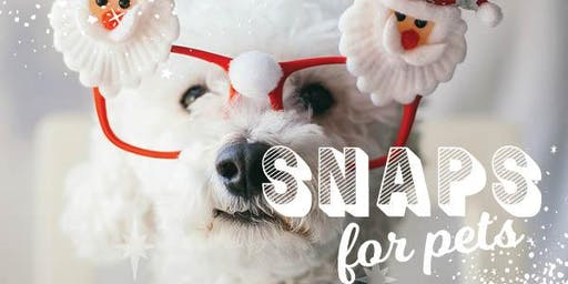Santa Pet Photography