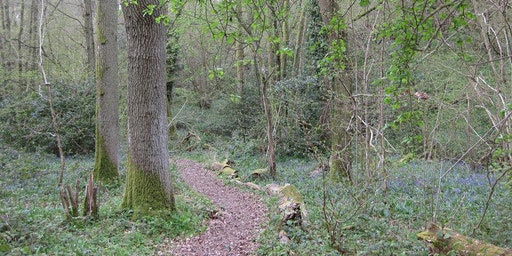 Free adult nature connection / Forest Bathing session
