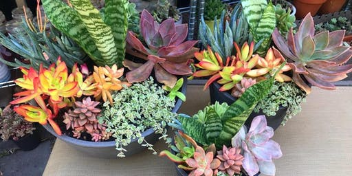 Christmas Succulent Bowl Workshop