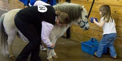 Horse & Pony Experience