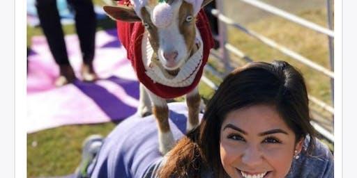 Holiday Goat Yoga Addison Circle!