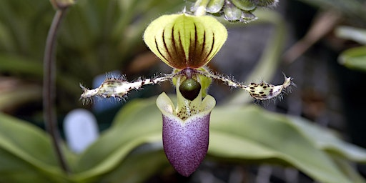 A Deeper Understanding of Orchids: Spring 2020 (3-Part Series)