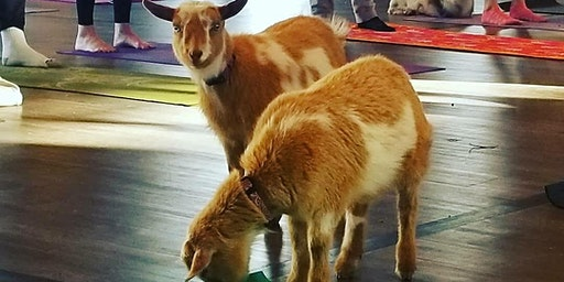 Baby Goat Yoga at Faith Lutheran Church