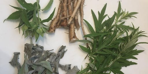 Herbs to Help You Through the Winter: Immunity