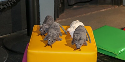 Whitehall Baby Mice - Winter Wonderland