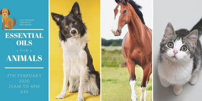 Essential oils for cats, dogs and horses - Workshop