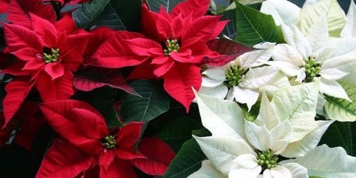 HOLIDAY DIY: Poinsettia Felted Flower Workshop