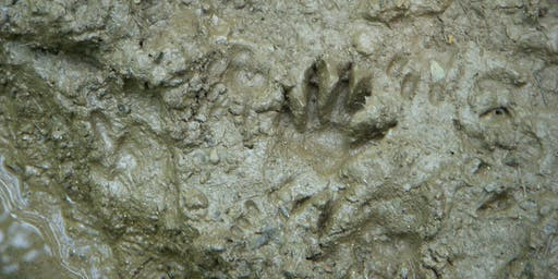 Paws to Ponder: Land Mammal Tales and Tracks Part 2