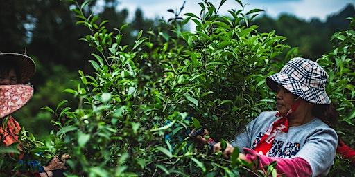 The Journey of Tea - Teeverkostung und Workshop