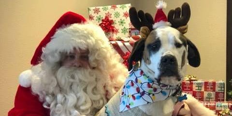 Doggie Pictures with Santa!