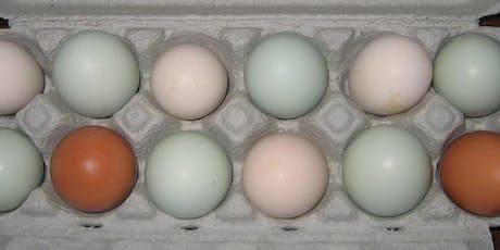 Grading Eggs for Market: Issues and Options tickets