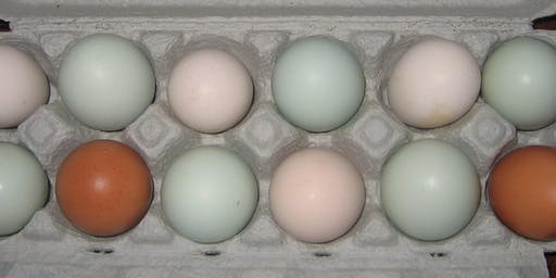 Grading Eggs for Market: Issues and Options