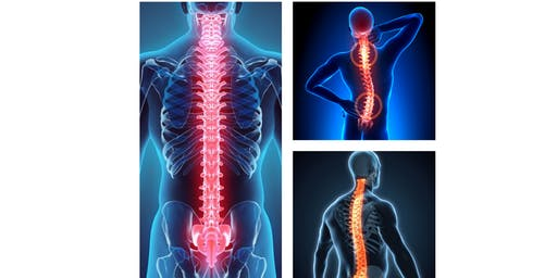 Spinal Health: The Key to Your Core
