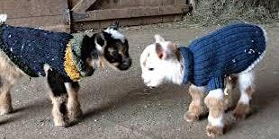 Goat Yoga Houston Nett Bar Sweater Weather