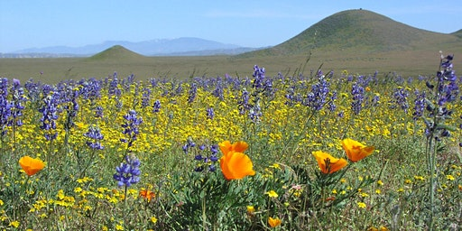 Private Wildflower and Botanical Adventure