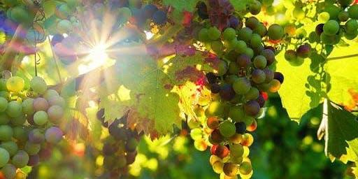 Fermentation Class: South African Wine