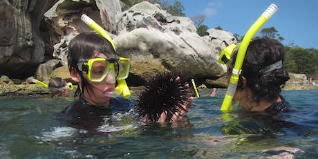 Snorkelling Discovery Tour tickets
