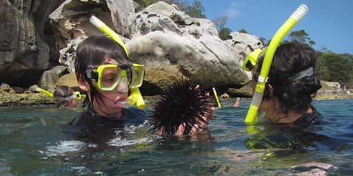 Snorkelling Discovery Tour