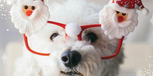 Santa Pet Photos
