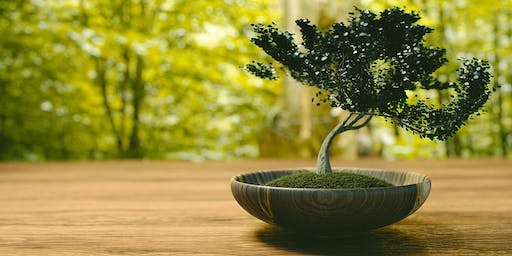 Bonsai for Beginners! Free Open Workshop with Barry Figard
