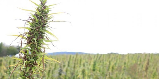 SUNY Morrisville Hemp Producers and Processors Roundtable