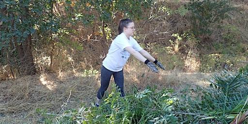 Weeding @ Highland Oaks