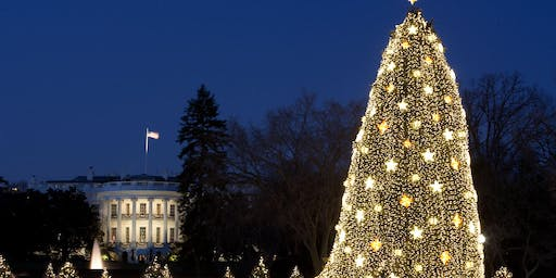 Limousine, Luxury and Lights: Holiday Limo Tour of the Festive Lights of DC