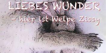 """Lesung mit Buch-Verlosungen """"Liebes Wunder - hier ist Welpe Zissy"""""""