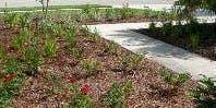 Landscape Pest Management