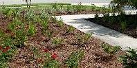 Landscape Pest Management - Jessie Brock Community Center