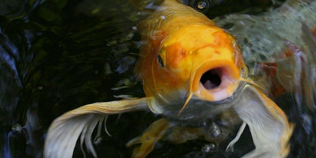 Fish Wellness Seminar tickets
