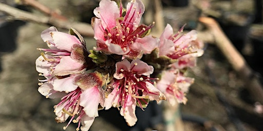 Backyard Orchard Culture