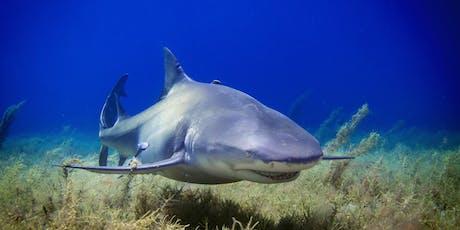 'Shark Tank' Like  Challenge tickets