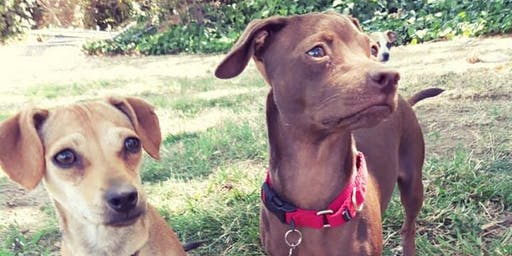 Adoption Event - Haven Dogs