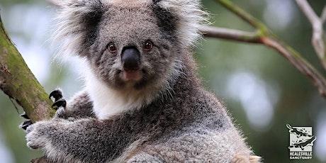 MSA Trips: Healesville Sanctuary & Sherbrooke Falls tickets