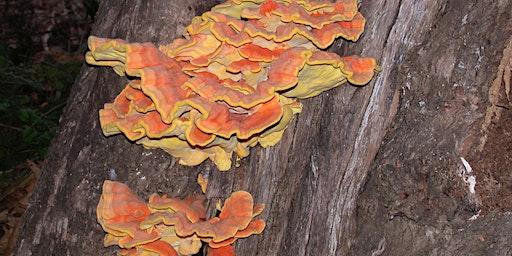 Favorite Edible Mushrooms of Sonoma County, Presentation by Darvin DeShazer