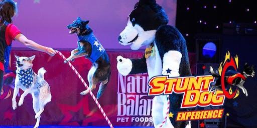 Chris Perondl's Stunt Dog Experience