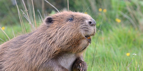 Britain's Wildlife - Ups and Downs, Vanished Species and New Arrivals tickets