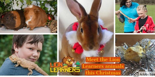Christmas with the Lion Learners animals at North Lincolnshire Museum