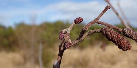Winter Tree Identification Workshop Moray tickets