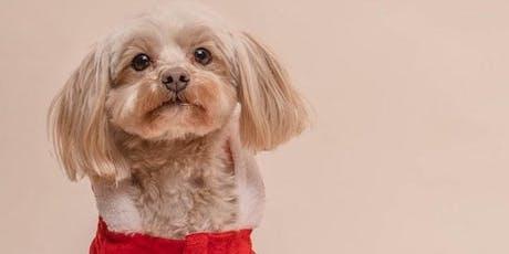 Portraits de Noël avec My Pet Agency billets