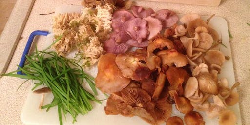 A Taste of Winter - An Urban Forage in Manchester