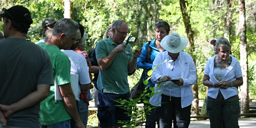 Introduction to Plant Identification