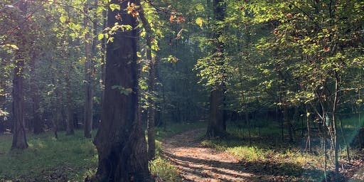Serenbe Forest Bathing Walk