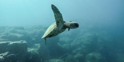KNO - Under the Sea