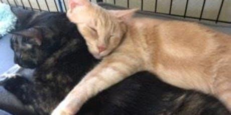 Cat Adoption Fair tickets