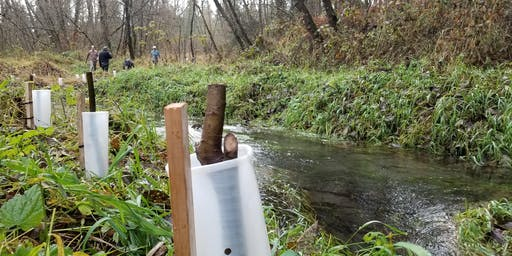 Brighton Creek Planting - 11/27