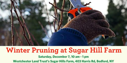 Winter Pruning Workshop and Volunteer Event