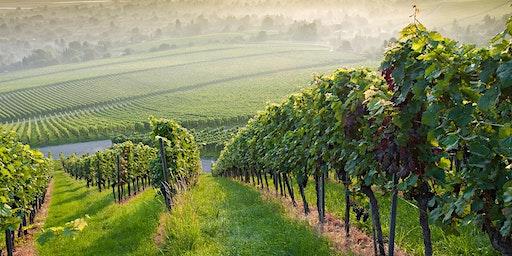 Sustainable Vineyards:  Tour & Tasting