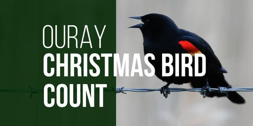 Ouray Christmas Bird Count
